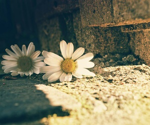 flowers, life, and nature image