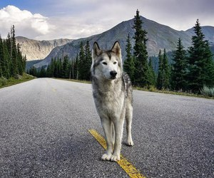 dog, mountains, and road image