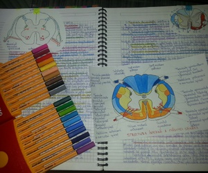anatomy, Collage, and drawing image