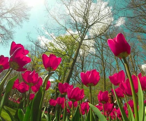 beautiful, flower, and image image