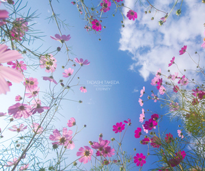 cosmos, flowers, and nature image
