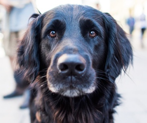 dog, model, and photography image