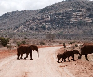 animal, mountains, and elephants image