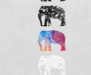 elephant, animals, and background image