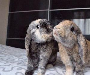 rabbits and sweet image
