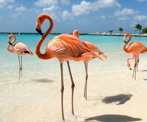 flamingo, beach, and ocean image