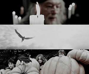 dumbledore, hermione granger, and time image