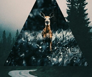 evening, forest, and hipster image
