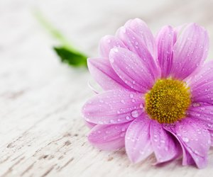 daisy, flowers, and simply beautiful image