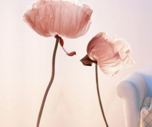 flower and wall decal image