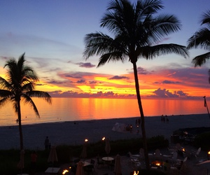 america, palms, and Naples image