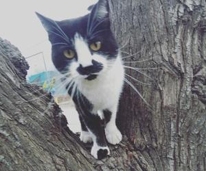 cat, gato, and neko image
