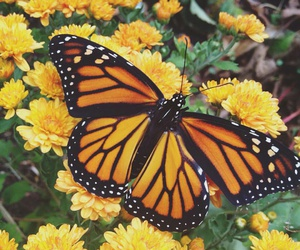 butterfly, colors, and naturaleza image