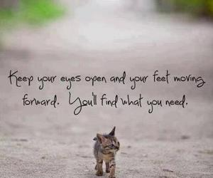 quotes, cat, and kitty image