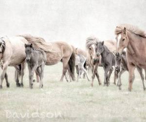 wild horses image