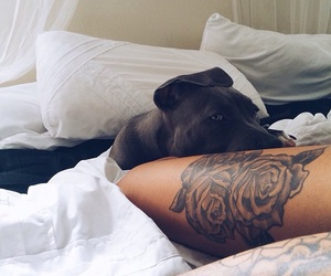 tattoo, dog, and bed image