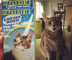 cat, unicorn, and cereal image