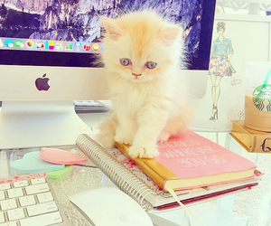 cat, cute, and kitten image