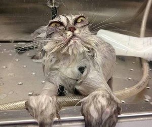 bath time, cats, and wet image