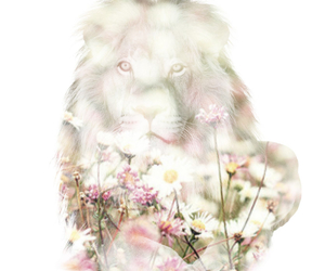 background, fade, and flowers image