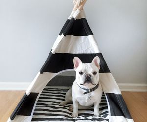 adorable, animals, and diy image