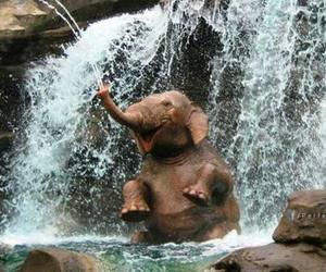 animals, water, and elephant image