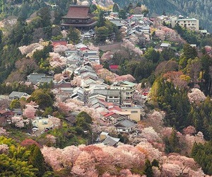 japan and sakura image