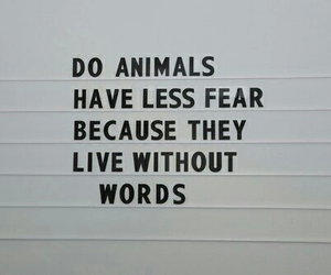 animal, quotes, and fear image