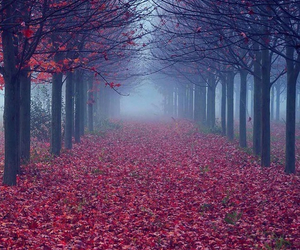 red, trees, and autumn image