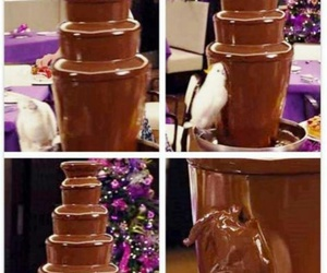 chocolate, Cockatoo, and happiness image