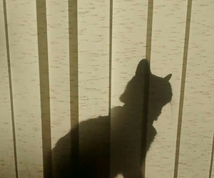 animal, cat, and shadow image
