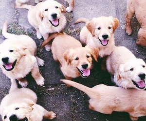 dogs and lovely image