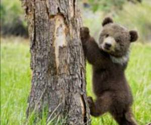 bear, cute, and animal image
