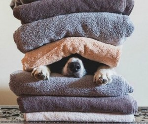 dog, home sweet home, and funny image