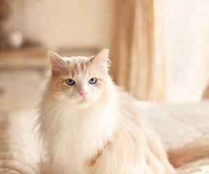 beautiful, cat, and classy image