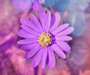 flower and purple image