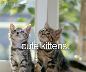 girl, just, and kitten image