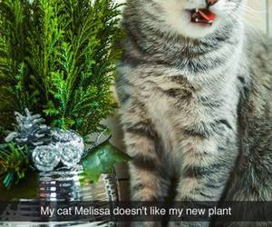 cat, funny, and plant image