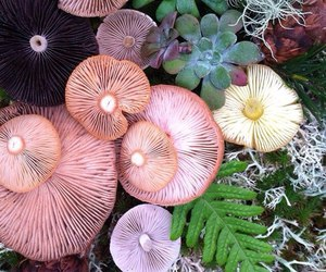 herbs, mushrooms, and nature image