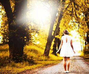 autumn, backlight, and beautiful image