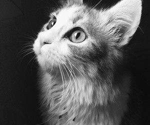 black and white, cat, and animal image