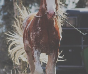 horse, animal, and clydesdale image