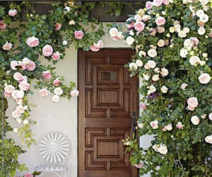 house, roses, and cute image