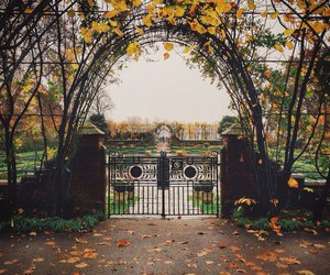 autumn, yellow leaves, and garden image