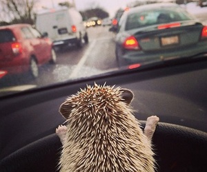 hedgehog, animal, and car image