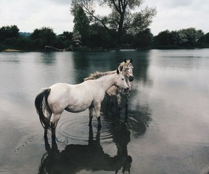 horses, trees, and a lake image