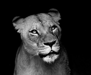 animals, beautiful, and black n white image