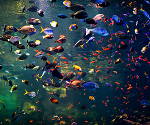 animals, fish, and water image