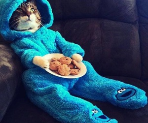 cat, animal, and Cookies image