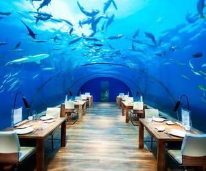 restaurant, ocean, and sea image